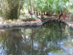 turtle pond.. WoW!!