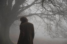 Photography, trees, fog
