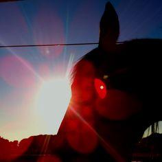 Sunset minorcan horse #mare #pura Raza Menorquina