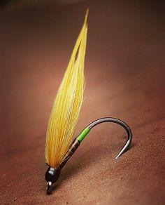 Olive Cormorant