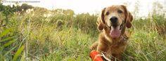 How to Safely Remove a Tick   Minneapolis   Sidewalk Dog Blog   Sidewalk Dog Blog