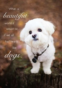 Jasper Coombs, 5 year old Maltese, Herndon, KY - photo credit Lindy Buss, Simply Charming Photographs Baby Dogs, Dogs And Puppies, Doggies, Cute Funny Animals, Cute Dogs, Dog Quotes, Quotes About Dogs, Dog Sayings, Best Small Dogs
