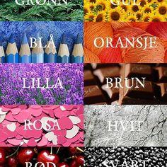 What is your favorite color? ☺️❤️ #skandinorsk #jegsnakkernorsk #norsk #norwegian #noruegues #norvege #learn #polyglot #learnnorwegian #lærere #lærer #lærernorsk #bokmål #norge #norway #farger #rød #lilla #grønn #dansk #svenska #svensk #sverige