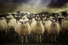 Audran Gosling - Sheepfest - Amazing processing to focus on the light.