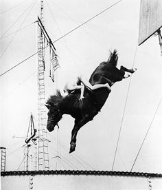 horse diving    A male circus performer holds tight while riding atop a horse for a stunt high-dive into a swimming pool, 1930s. (Photo by Frederic Lewis/Getty Images)