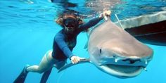 Things I've Learned About Sharks From Swimming With Them