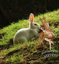 fadas coelho
