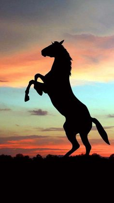 Silhouette Painting, Horse Silhouette, Horse Wallpaper, Animal Wallpaper, Sunset Wallpaper, Cute Horses, Horse Love, Cavalo Wallpaper, Animals And Pets