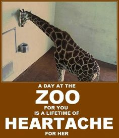 Please avoid the Zoo... and SeaWorld #MyVeganJournal