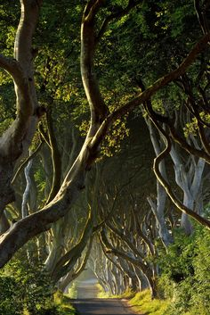The Game of Thrones Filming Locations You Can Visit In Real Life - The Dark Hedges in Northern Ireland—which Game of Thrones fans may recognize as the Kings Road. Dark Hedges Ireland, Alcazar Seville, Game Of Thrones, Thingvellir National Park, Rock Sculpture, Uk Destinations, King's Landing, Nature Aesthetic, Filming Locations