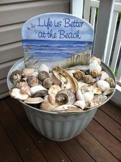 shells, what a great idea to show off one's collection of shells