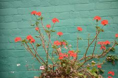 turquoise and coral - possible colours Home Wall Colour, Wall Colours, Paint Colors, Mint Walls, Bright Walls, Mint Garden, Orange Plant, House Wall, Brand Board