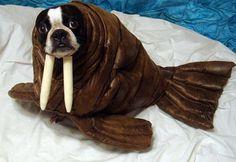 2171875_baasje-maakt-hilarische-kostuums-voor-hond_image_2.jpg (620×428)