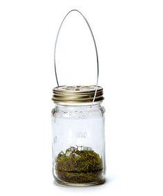 Look at this #zulilyfind! Mason Jar Light - Set of 12 #zulilyfinds