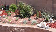Desert Backyard on Pinterest Desert Landscaping Backyard