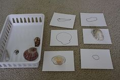 Matching shells to shell outlines