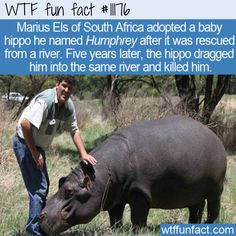 Creepy Facts, Wtf Fun Facts, Funny Facts, Funny Memes, Random Facts, Fun Facts About Animals, Weird Animal Facts, Polar Bears Live, Amazing Science Facts