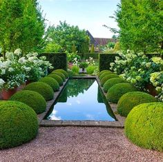 In this article we will discuss how to design a strictly formal garden on a large, rectangular area. Designing formal garden needs a little . Boxwood Garden, Topiary Garden, Garden Pool, Water Garden, Garden Landscaping, Box Garden, Boxwood Topiary, Garden Cottage, Pool Water