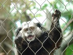 Animal Enclosures Netting - Buy animal enclosures netting, animal wire rope netting, animal enclosure net Product on Liulin Zoo Mesh Supplier Monkey Cage, Small Animal Cage, Pet Cage, Stainless Steel Wire, Mesh, Fencing, Animals, Fences, Animales