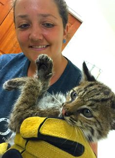 """29 July 2016, and from near Tampa, Florida:  """"Stray 'Kitten' Rescued From Highway Isn't What She Seems""""  Isn't she gorgeous ? !  ! Spirit Feather !"""