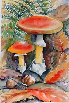 i funghi ingannevoli -  acquerello di Lorenza Pasquali 30x45
