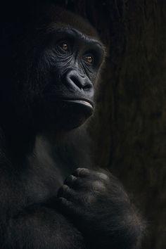 """""""Con el corazón roto"""" – Kristyna Novakova – Zoológico del Bronx, Nueva York."""