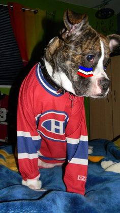 Chien avec chandail CCM, photo soumise par Isabelle Massicotte / CCM jersey dog, submitted by Isabelle Massicotte