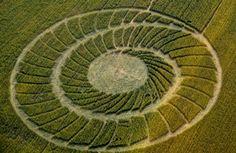 Crop Circle at Bracciano, Bertinoro. (FC). Reported 20th May 2012