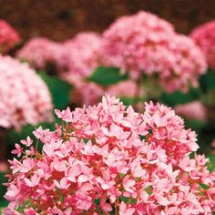 If, on the other hand, your yard is short on sun, try oakleaf hydrangea, which prefers partial shade.