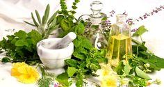 Burdur Bitkisel Ürünler