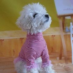 Cute Stripes Pattern Shirt with High Collar for Pets Dogs (Assorted Sizes) – USD $ 10.28