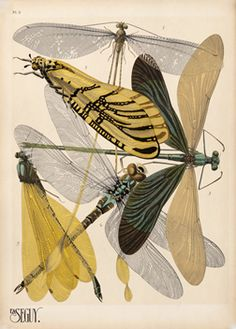 Seguy, Emile-Alain poster: Dragonflies & Damselflies Insect Print - Insectes - Plate 9