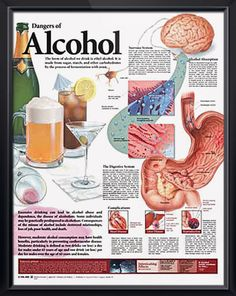 Dangers of Alcohol anatomy poster discusses how alcohol affects the nervous and digestive systems and can cause complications. Remember April Alcohol Awareness Month