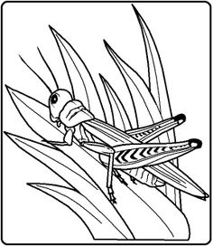 find this pin and more on kriebeldieren by raisdepoortere grasshopper watching predator from grass coloring page