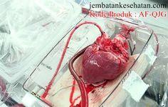 Obat Lemah Jantung Paling Ampuh Tanpa Operasi Dan Sudah Terbukti