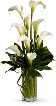 Elegant calla lily's