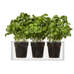 Make more of your living or working space by adding the Triple Cube Tabletop Planter. This Indoor Planters clear design allows you to see the water, soil and roots of the plant exposed for viewing of plant growth mechanics. Plastic Planters, Flower Planters, Flower Pots, Potted Plants, Indoor Plants, Small Plants, Indoor Gardening, Cubes, Feng Shui
