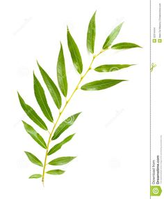 willow leaf tattoo - Google Search More