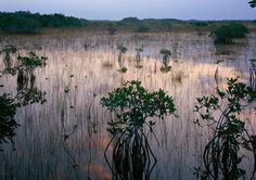 Pouratis Pond-Mangroves-Everglades National Park - Florida