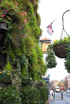 Why we love London - the flowers!