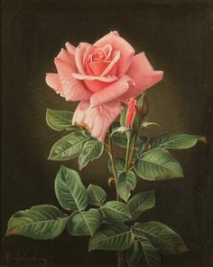 Wolfgang Grünberg (1909-2001) - A Rose, oil on canvas, 27.5 x 23 cm.