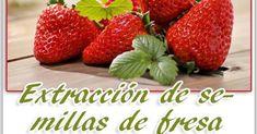 ¿Has comprado fresas o frutillas y quieres tener tu propia planta?