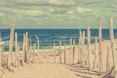 Beach at Cape cod by Patricia Hofmeester on Creative Market