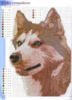 Cross-stitch Husky, part 2...  Gallery.ru / Фото #4 - Disenos de animales en punto de cruz - anfisa1