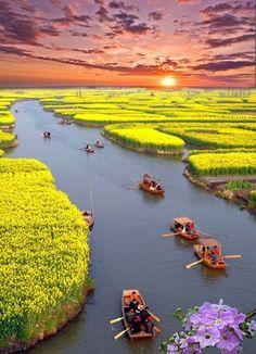 Canola Fields , Xinghua, China