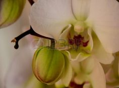 Beautiful White Orchid.