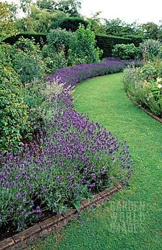 Lavender border - would love this in the front garden Garden Borders, Garden Paths, Garden Landscaping, Landscaping Ideas, Pergola Garden, Back Gardens, Outdoor Gardens, Lavender Garden, Lavender Hedge