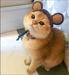 Things that make you go AWW! Like puppies, bunnies, babies, and so on. A place for really cute pictures and videos! Crazy Cat Lady, Crazy Cats, Fall Cats, Cat Mouse, Animal Fashion, Cute Puppies, Cats And Kittens, Cute Pictures, Cute Animals