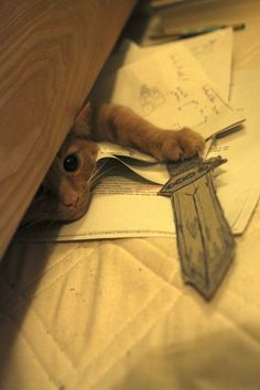 This very courageous warrior. | 27 Cat Pictures To Thaw Your Freezing Cold Wintery Heart
