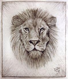 Lion by Snoeffel on DeviantArt